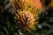 Australie-bluemountains-0747