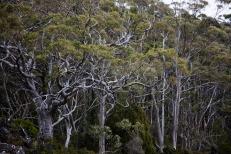 Tasmanie-Australie-0208