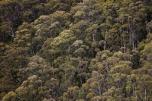 Tasmanie-Australie-0301
